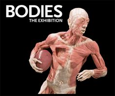 Body Museum, South Street Seaport