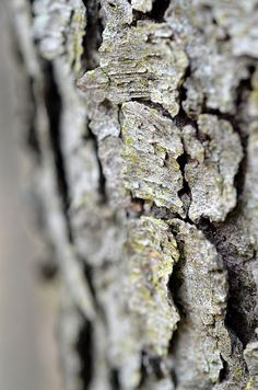 beautiful photos of Nature close-up  http://coco-knits.blogspot.com/2011/11/listen.html