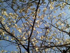 Thomasina's Words: Springtime and Dogwood Trees. I Love This Time of ...