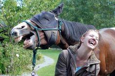 Se gli animali rovinano le foto ricordo: i 30 migliori photobomb del 2013