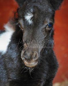 Pony :)