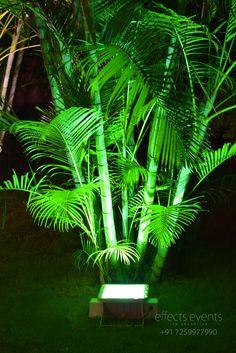 Wedding decoration ideas, tree lights