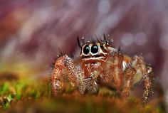 Beautiful Bugs, Beautiful Pictures, Weird Insects, Creepy, Scary, Beautiful Sea Creatures, Itsy Bitsy Spider, A Bug's Life, Zoology