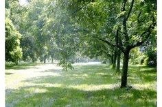 How to Plant Pecan Trees From Seed (5 Steps)   eHow