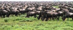 Giraffe, Elephant, Serengeti National Park, Baboon, Hyena, Travel Tours, Leopards, Travel Agency, Impala