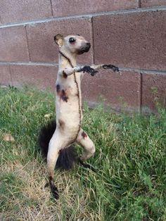 zombiesquirrelzombiesquirrelzombiesquirrelzombiesquirrelzombiesquirrelzombiesquirrelzombiesquirrelzombiesquirrelzombiesquirrelzombiesquirrel. Zombie. Squirrel. I NEED it.