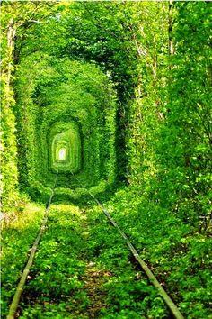 Train Tree Tunnel, Urkraine