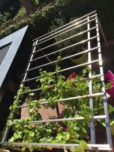 Pergola RVS voor de druivenstruik