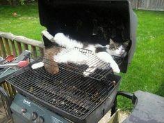 Katzen sorgen dafür, dass Du niemanden mehr zum Grillen einladen kannst.