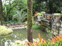 Pond of reclaimed granite blocks, surrounded with bromeliads