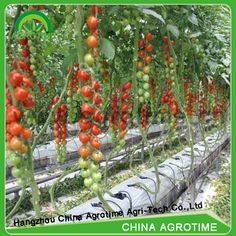 The Advantages Of Growing Food Indoors With Hydroponic Gardening Indoor Hydroponics, Hydroponic Growing, Hydroponics System, Hydroponic Gardening, Aquaponics Diy, Indoor Vegetable Gardening, Container Gardening, Indoor Farming, Vertical Farming
