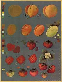 Fruit step sheet by Jo Sonja.
