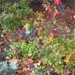 fall-garden