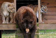 Noah's Ark Animal Sanctuary | THE SANCTUARY Locust Grove, GA