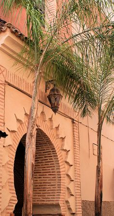 arch and palm tree in Marrakech