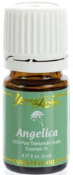 Angelica Essential Oil | Young Living Essential Oils Angelica oil (Angelica archangelica) has soothing qualities that help relax nerves and muscles.