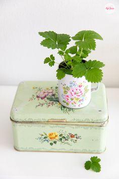 Love strawberry plants, Syl loves, Cath Kidston