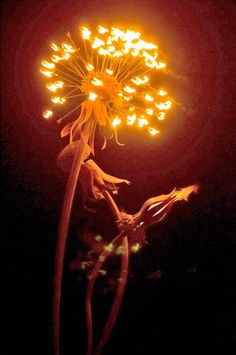 Awesome photos of Karen Cusolito setting her artwork on fire