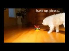 The Best Funny Animals Video Compilation 2014 | World Most Funny Animals Video 2014  funny animal video, funny videos, funny animals, funny video, funny cats, funny cat videos, funny pranks, funny dog videos, animal videos funny, funny, funny babies, funny dogs, animal videos, funny animal