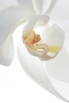 white flower - colors of winter