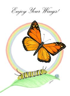 """Help save migrating Monarch butterflies by planting milkweed, the """"host plant"""" which is required for the butterflies to reproduce."""