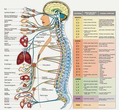 Innervation & symptoms.