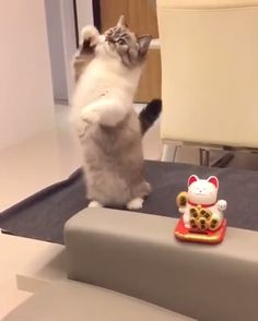These cute kittens will warm your heart. Cats are awesome friends. Cute Funny Animals, Cute Baby Animals, Animals And Pets, Funny Cats, Cute Cats And Kittens, I Love Cats, Kittens Cutest, Crazy Cats, Cute Animal Videos