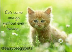 Cats come and go without ever leaving! @easyologypets