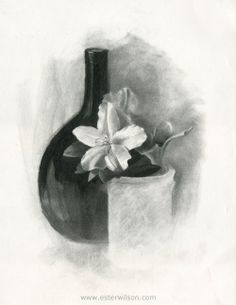 Spring Azalea  original charcoal drawing of a white by esterwilson, $75.00