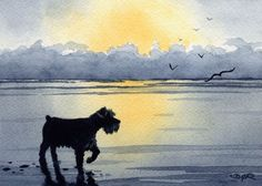 """Miniature Schnauzer Sunset"" Art Print Signed by Artist DJ Rogers"