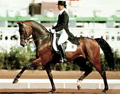 Rembrandt - My favorite dressage horse of all time!