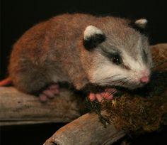 Life Size Baby Opossum OOAK Needle felted w Real wood Log. $595.00, via Etsy.