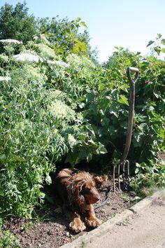 A shady spot in the sunny Kitchen Garden at Gravetye Manor