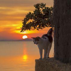 Mel Cat Poniente