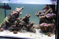 Aquascaping, Show your Skills... - Page 6 - Reef Central Online Community