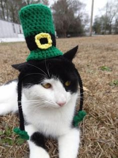 This cat who's not afraid of haters hating on his tall knit leprechaun hat | 15 Cats Who Can't Wait For St. Patrick's Day