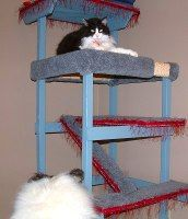 21 Free Cat Furniture Plans: Free Plans for Cat Trees, Condos, Scratching Posts and Cat Tree Condo, Cat Condo, Cat Tower Plans, Crazy Cats, Crazy Cat Lady, Cat Furniture, Furniture Plans, Cat Habitat, Fancy Cats