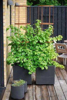 Outdoor Planters, Outdoor Gardens, Garden Planter Boxes, Garden Trellis, Terrace Garden, Garden Structures, Garden Planning, Garden Inspiration, Garden Furniture