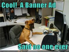 Pet Owners Speak Out at Last - Funny pictures and memes of dogs doing and implying things. If you thought you couldn't possible love dogs anymore, this might prove you wrong. Boxer And Baby, Boxer Love, New Puppy, Puppy Love, Funny Animals, Cute Animals, Animal Jokes, Pets 3, Dogs Of The World
