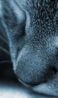 480x800 Wallpaper cat, face, nose, gray