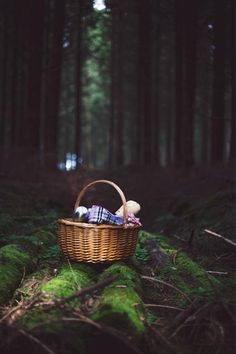 Picnic in the woods ♥