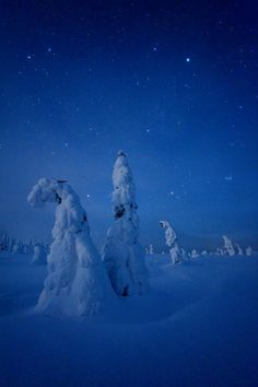 Snowy Landscape in Riisitunturi National Park at night_ Finland Snow Night, Lappland, Winter Is Here, Travel Memories, Out Of This World, Winter Landscape, Winter Scenes, The World's Greatest, Amazing Nature