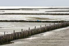 Zeekleilandschap. Klei uit de zee spoelt aan op het land in Groningen.