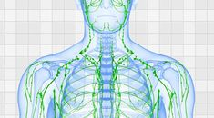 Jump to Adopting Proper Technique - with you are undertaking lymphatic massage, you desire to create certain that you don't press too hard. The lymphatic vessels . -- Understand more tips by clicking the link on the image. Detox Lymphatic System, Best Way To Detox, Lymph Fluid, Lymphatic Massage, Muscle Anatomy, Lymph Nodes, Dry Brushing, Massage Therapy, Rebounding