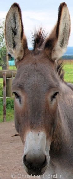 Donkeys are delightful.
