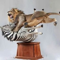 10 of the Greatest Taxidermy Jobs Ever 60 million.lol while this mount is neither antique or victorian it still is AMAZING ! Bad Taxidermy, Taxidermy Decor, Taxidermy Display, Deer Mounts, Arte Horror, Wildlife Art, Macabre, Lions, Lion Sculpture