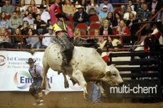 Parker Breding of Edgar, Mont. rides Sharp Shooter during the bull riding section of the first performance of the 82nd annual San Angelo Stock Show & Rodeo at Foster Communications Coliseum in San Angelo.