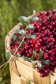 whisperofvintage Basket of Cranberries