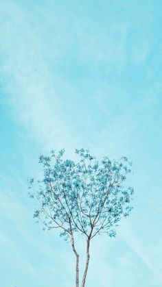▷ 1001 + spring wallpaper images for your phone and desktop computer spring background, blue skies, blue blooming tree, phone wallpaper Frühling Wallpaper, Spring Wallpaper, Aesthetic Iphone Wallpaper, Aesthetic Wallpapers, Nature Wallpaper, Wallpaper Ideas, Blue Flower Wallpaper, Blue Wallpaper Iphone, Minimal Wallpaper