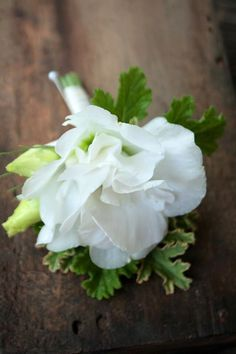 White Lisianthus Boutonniere. with pelargonium foliage, but perhaps in soft pink or cream